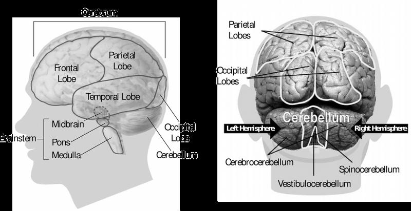 Snel boos na frontaal hersenletsel