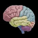 3D-Brain icoon afbeelding
