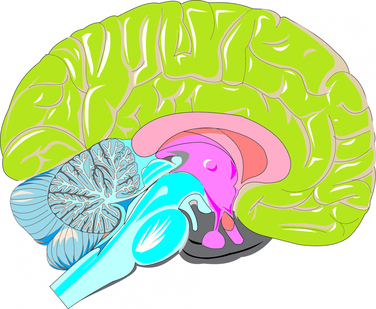 Een Tia Is Een Korte Afsluiting Van Een Bloedvat In De Hersenen