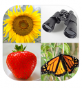Gemakkelijke afbeeldingen quiz icoon afbeelding